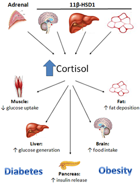 disasters of cortisol